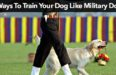 4 Ways To Train Your Dog Like Military Dogs